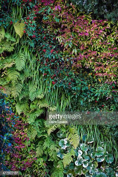 Green walls, Tokyo city,