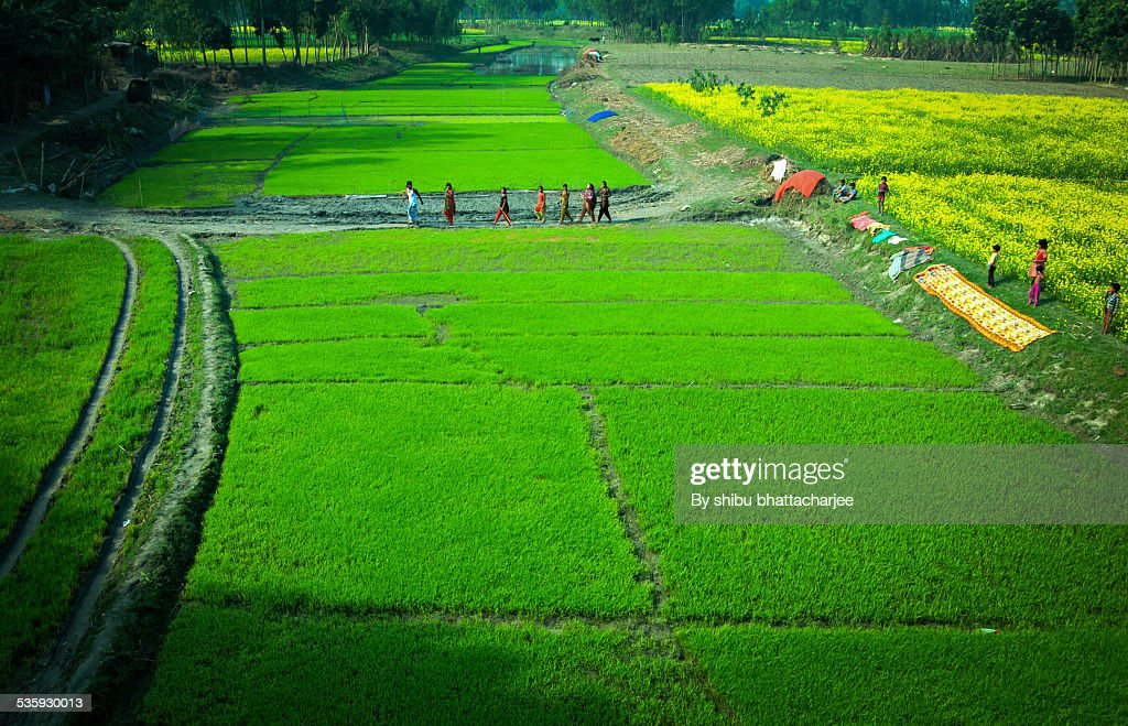 Green way on the Chest of river Brahmaputra : Stock Photo