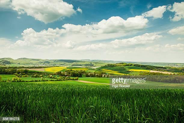 Green wheatfields between rolling hills