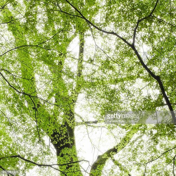 Green woods