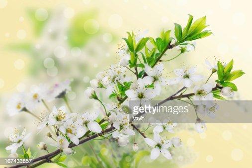 Conceito de Primavera Verde Amarelo : Foto de stock