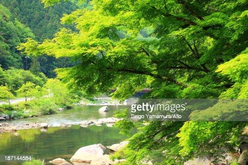 Greenery, Aichi Prefecture
