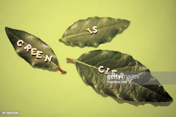 Greenery: close-up of three bay leaves on green background