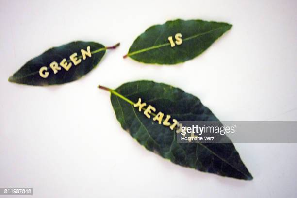 Greenery: close-up of three bay leaves on white background
