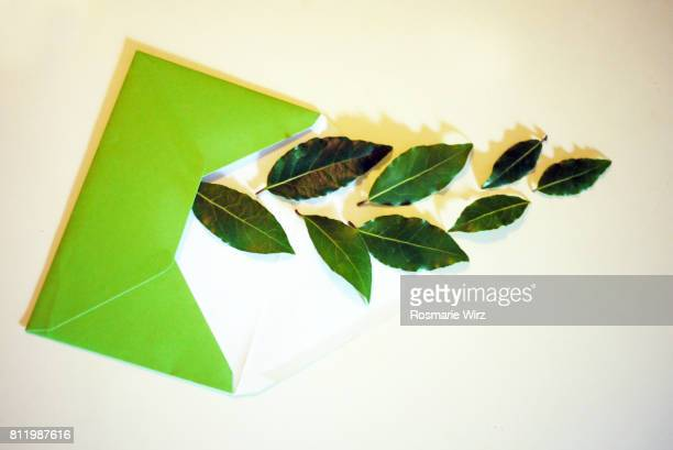 Greenery: green envelope with bay leaves
