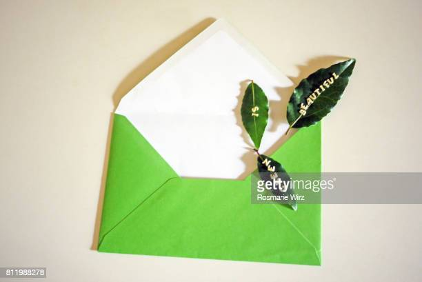 Greenery: green envelope with three bay leaves