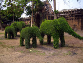 Greenest elephants have ever seen