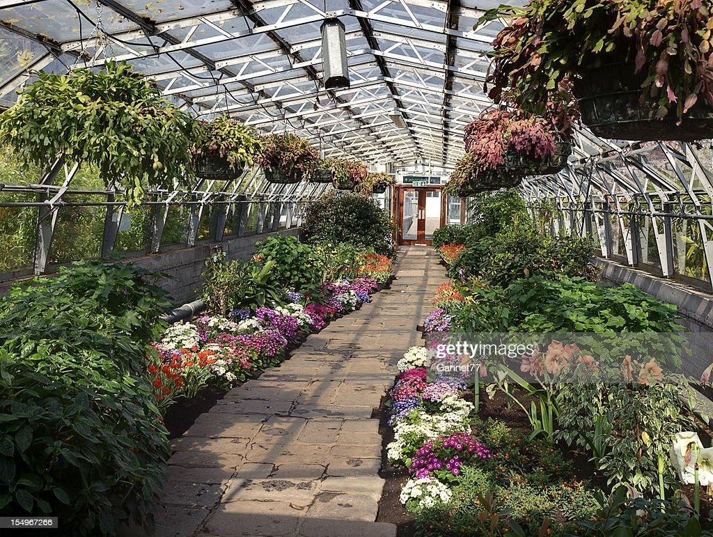greenhouse at duthie park winter gardens aberdeen stock photo