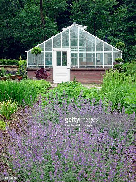 Greenhouse behind a bed of blooming catmint