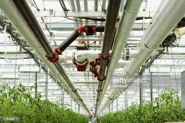 Greenhouse Culture