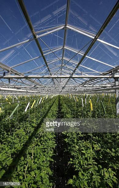 greenhouse detail