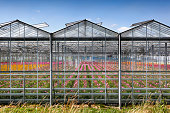 Greenhouse exterior with colorful flowers inside in the Netherlands