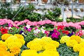 Greenhouse, Flowers in Bloom