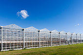 Greenhouse in Westland in the Netherlands