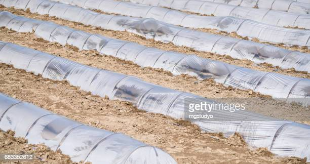 Greenhouse tunnels in a row on an agricultural field aerial wiew