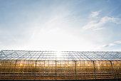 greenhouse with electric heating lamps inside