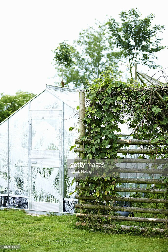 Greenhouse with plants in backyard : Stock Photo