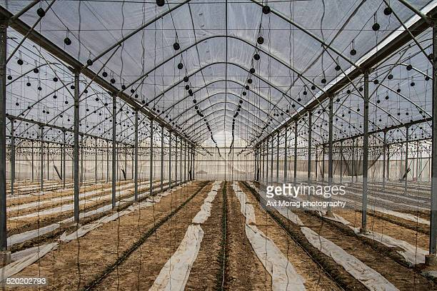 Greenhouse with trellising infrastructure