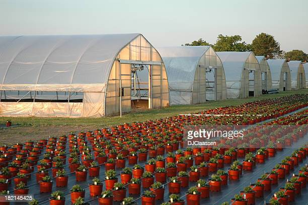 Greenhouses と鍋