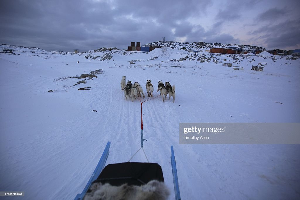 Greenland huskies pull a dog sled in Ilulissat : Stock Photo