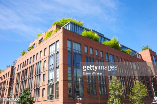 Green-leafed trees growing on penthouses