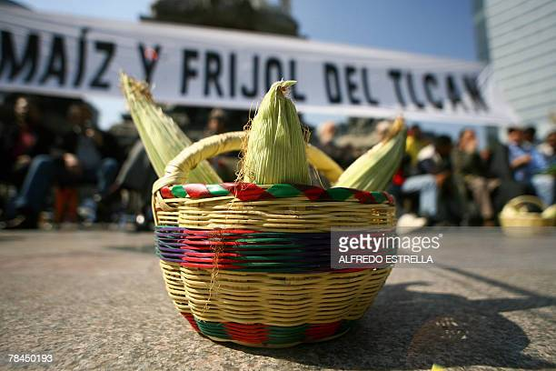 Greenpeace activists place a basket with corn during a protest 13 December 2007 in front of the Angel of the Independence monument in Mexico City...