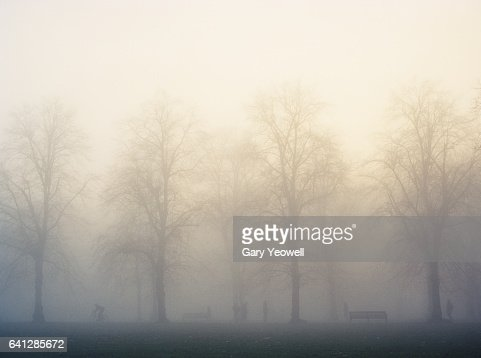 Greenwich park with trees and mist : Stock Photo