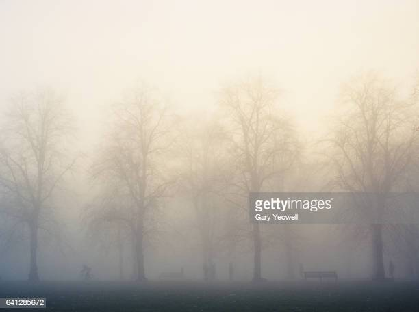 Greenwich park with trees and mist