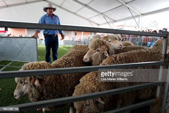 Greg Glasgow speaks to the crowd during the 'Bonnie Yard Dogs Show' at the Sydney Royal Easter Show on March 22 2013 in Sydney Australia Organisers...
