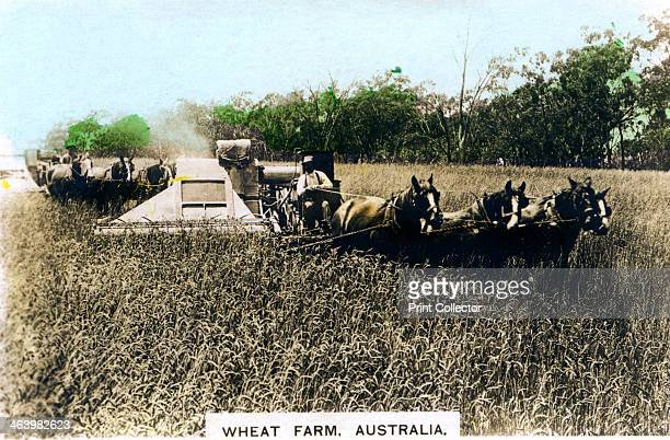 Grenfell wheat farm Australia c1920s From the Colonial Series set of handcoloured cigarette cards issued with Army Club Cigarettes Cavanders Ltd...
