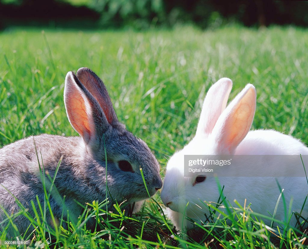Grey and white rabbits on grass