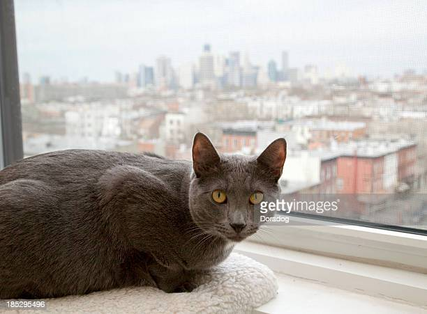 Grey Cat Lying on Window Sill Looking At View
