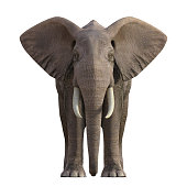 Realistic render of a grey Elephant