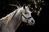 Grey horse on dark background
