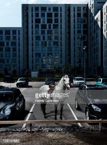 grey horse on parking : Stock Photo