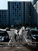 grey horse on parking