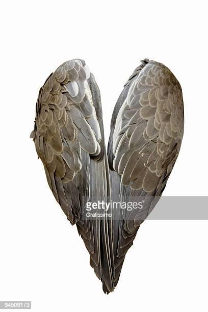 Gris paire d'ailes isolé sur blanc