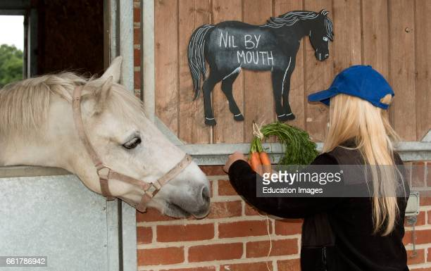 A grey pony trying to eat a bunch of carrots and a chalk board notice stating Nil by Mouth Stable girl removing a bunch of carrots from temptation