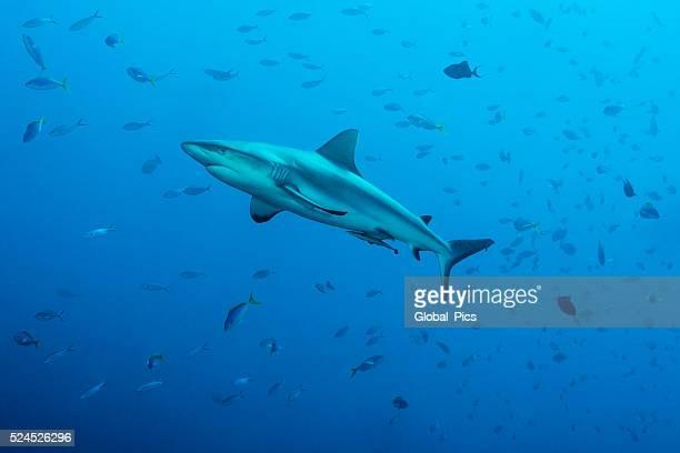 Grau riff, haie, blauen Ecke – Palau