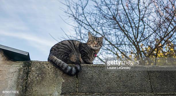 Grey tabby cat sitting on a stone wall with trees in the background