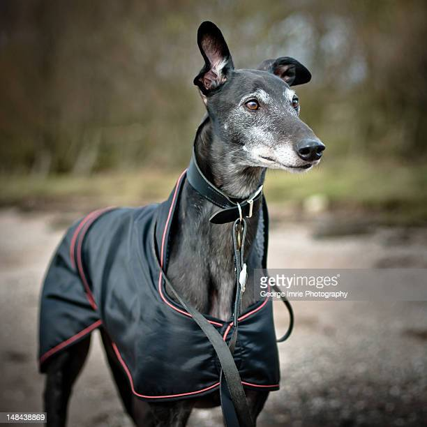 Greyhound Bus Stock Photos And Pictures