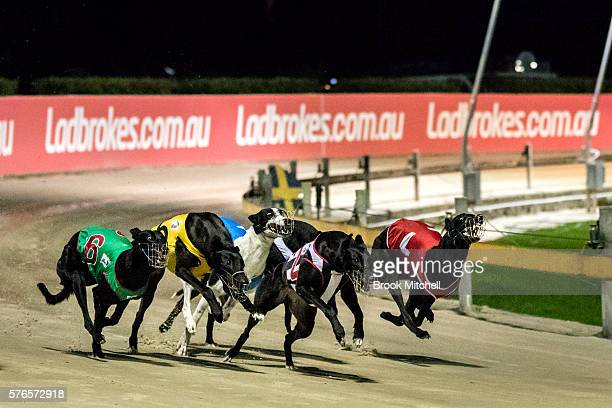 Greyhound racing resumes at Wentworth Park on July 16 2016 in Sydney Australia NSW Premier Mike Baird announced the banning of greyhound racing in...