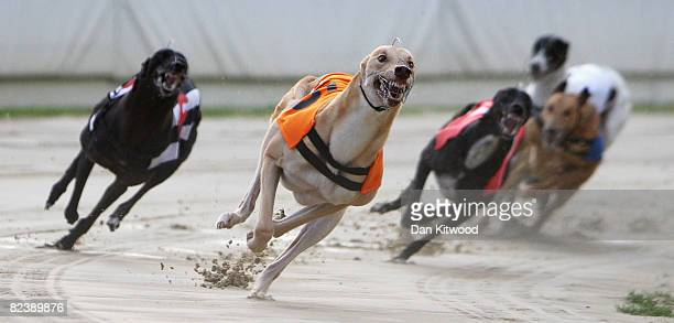 Greyhounds race at Walthamstow Greyhound Stadium on August 16 2008 in London England The famous Walthamstow Greyhound Stadium ran its last race on...