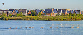 Row of 10 greylag Goose (Anser anser) swims along the reed covered green shores of a small lake bordering a modern residential area in Oegstgeest, the Netherlands. Other birds scattered over the lake