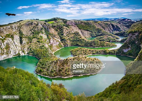 Griffon vulture flying over meanders of Uvac river in Serbia. : Stock Photo