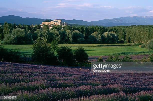 Grignan RhonesAlpes France Field of lavandin and the castle of Grignan in the background