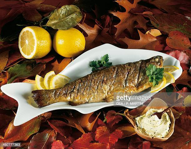 Grilled trout with white sauce