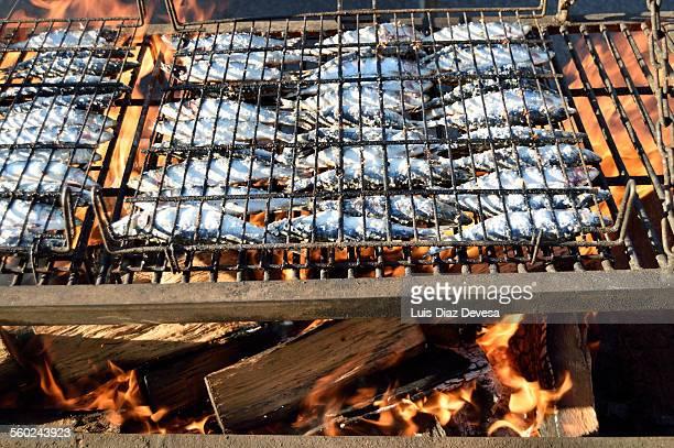 Grilling sardines on Pilgrimages