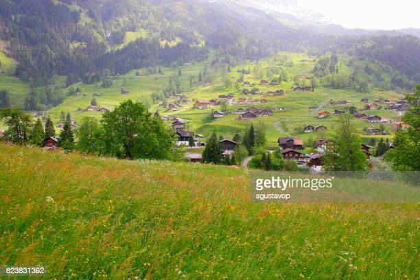 Grindelwald alpine village and Fary tale landscape at blossoming flowers springtime: idyllic alpine flowerbed valley and wildflowers meadows, dramatic swiss snowcapped alps, idyllic countryside, Bernese Oberland,Swiss Alps, Switzerland
