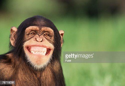 Grinning Chimpanzee